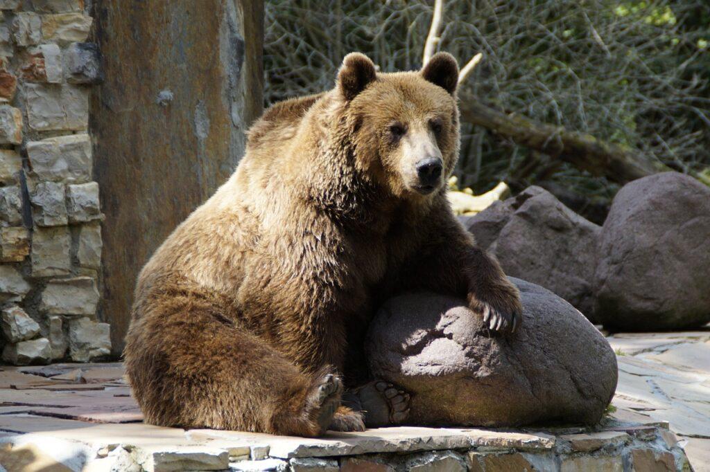 Poznan New Zoo Bear