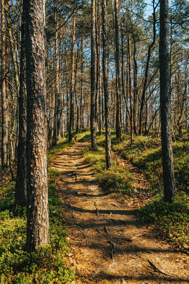 Hiking in Kranjska Gora