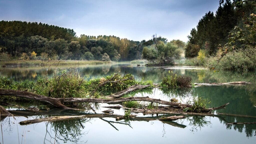 Danube Floodplains Day Trip