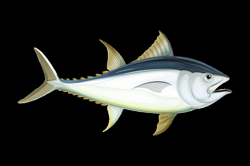 Costa Rica Tuna
