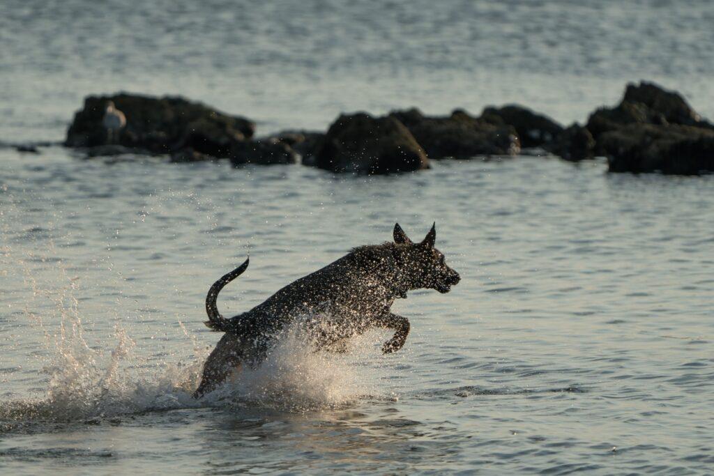 Dog enjoying Beach