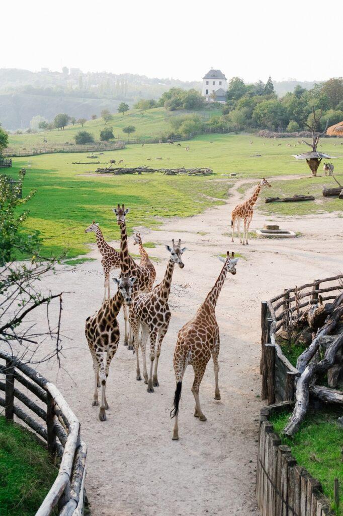 Prague Zoo with Kids