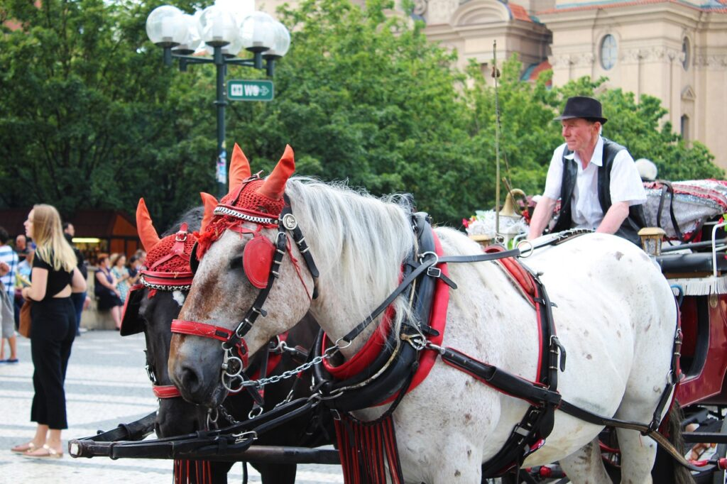 Horse Carriage Waiting