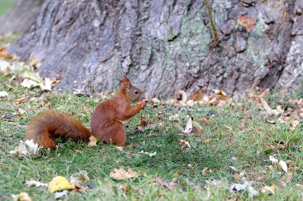 Squirrel in the city park