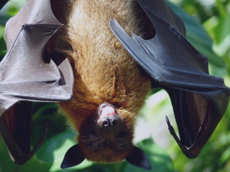 The Secret Kalong Island Bats In Indonesia