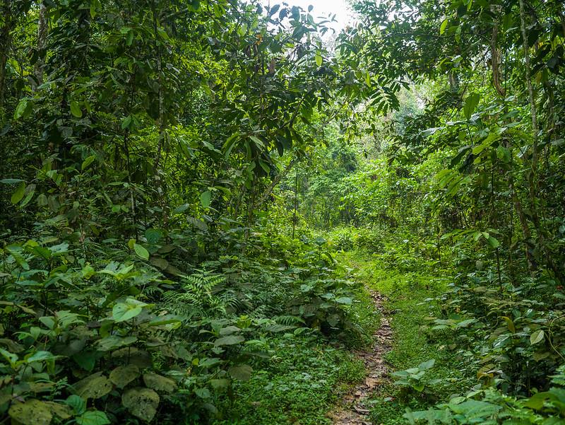 Jeypore Rainforest
