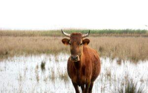 Menorca National Park Wildlife
