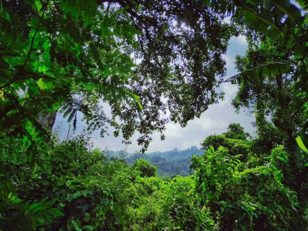 Tripura Greenery
