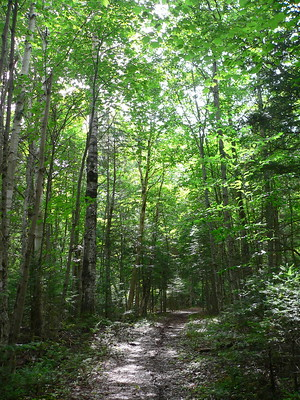 Lily Bay Sate Park Trail
