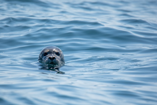 Boothbay Seal